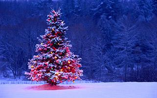درخت کریسمس روشن