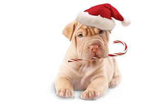 در انتظار کریسمس