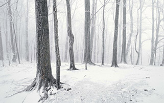 جنگل پوشیده از برف،تنسی