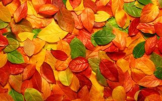 برگ های زیبای پاییزی