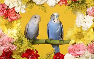 مرغ های عشق