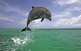دلفین شاد