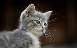 گربه با نگاه غرور آمیز