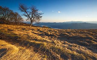 بر فراز تپه