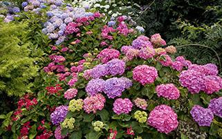 گل های رنگی،انگلیس