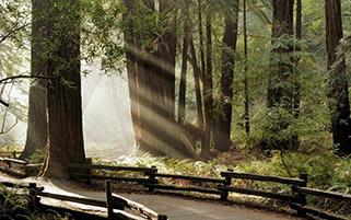 عبور آفتاب،کالیفرنیا