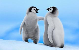 پنگوئن های امپراطور،قطب جنوب