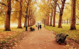 قدم زدن در پاییز