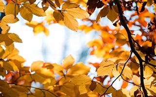 قاب پاییزی