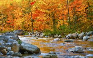 پاییز نقاش