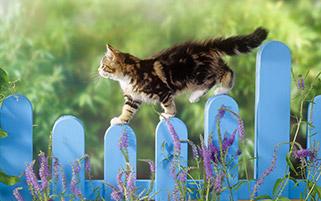 عبور یک گربه