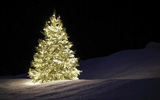 درخشش درخت کریسمس