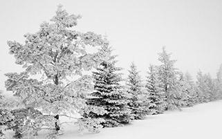 سکوت زمستان صبور