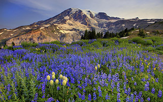 کوه های رینیر،بهار