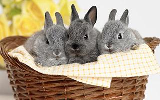 خرگوش های ناز