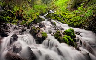 دنباله آبشار پری،کلمبیا،اورگان