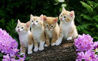 بچه گربه های بازیگوش