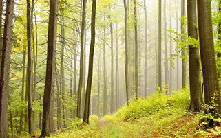 جنگل با شکوه