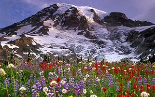 کوه رینیر، واشنگتن