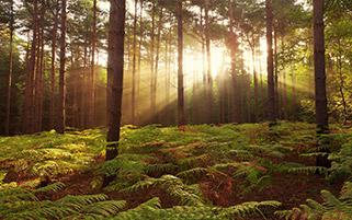 آغاز صبح در جنگل