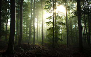 صبح جنگل، آلمان