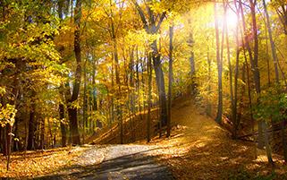 طلوع در جنگل پاییزی،اوهایو