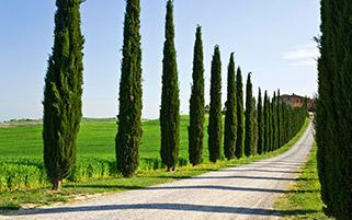مسیر ویلا،توسکانی، ایتالیا