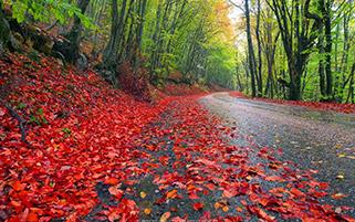 جاده پاییزی بارانی