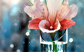 گلی در رویا برای تو