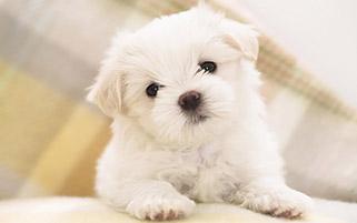 سگ با مزه