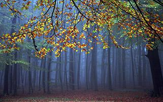 پاییز سرد