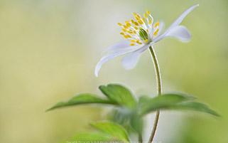 حس زندگی در یک گل