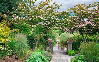 در باغ سبز