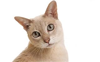 پرتره زیبا گربه
