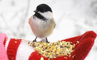دوست پرنده