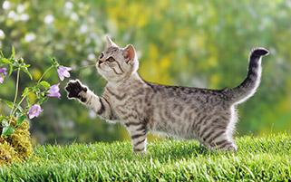 گربه بازیگوش