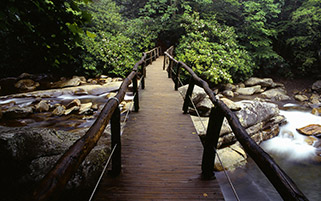 پل چوبی،تنسی