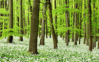 طبیعت بهار هینیچ،آلمان