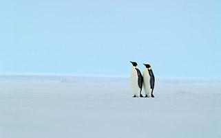 پنگوئنهای امپراطور،قطب جنوب