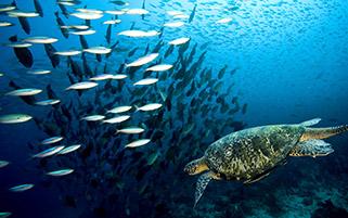 لاکپشت و ماهی ها