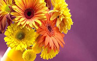 گل های رنگی دیزی در گلدان