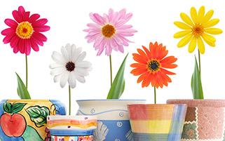 گلهای رنگی با گدان های رنگی