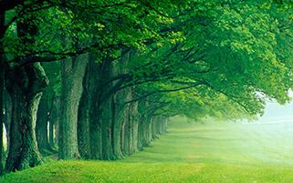 بهار سر سبز