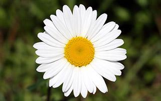 لبخند گل