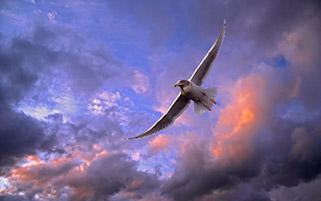 پرواز مرغ دریایی