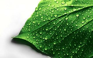 برگ سبز و قطره ها