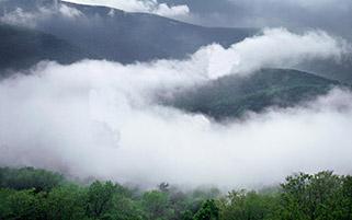 رویای جنگل و مه،ورجنیا