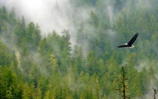 شکوه پرواز عقاب