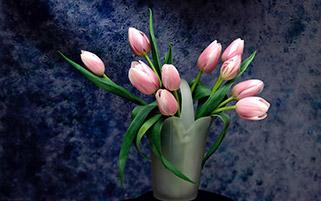 لاله های صورتی در گلدان