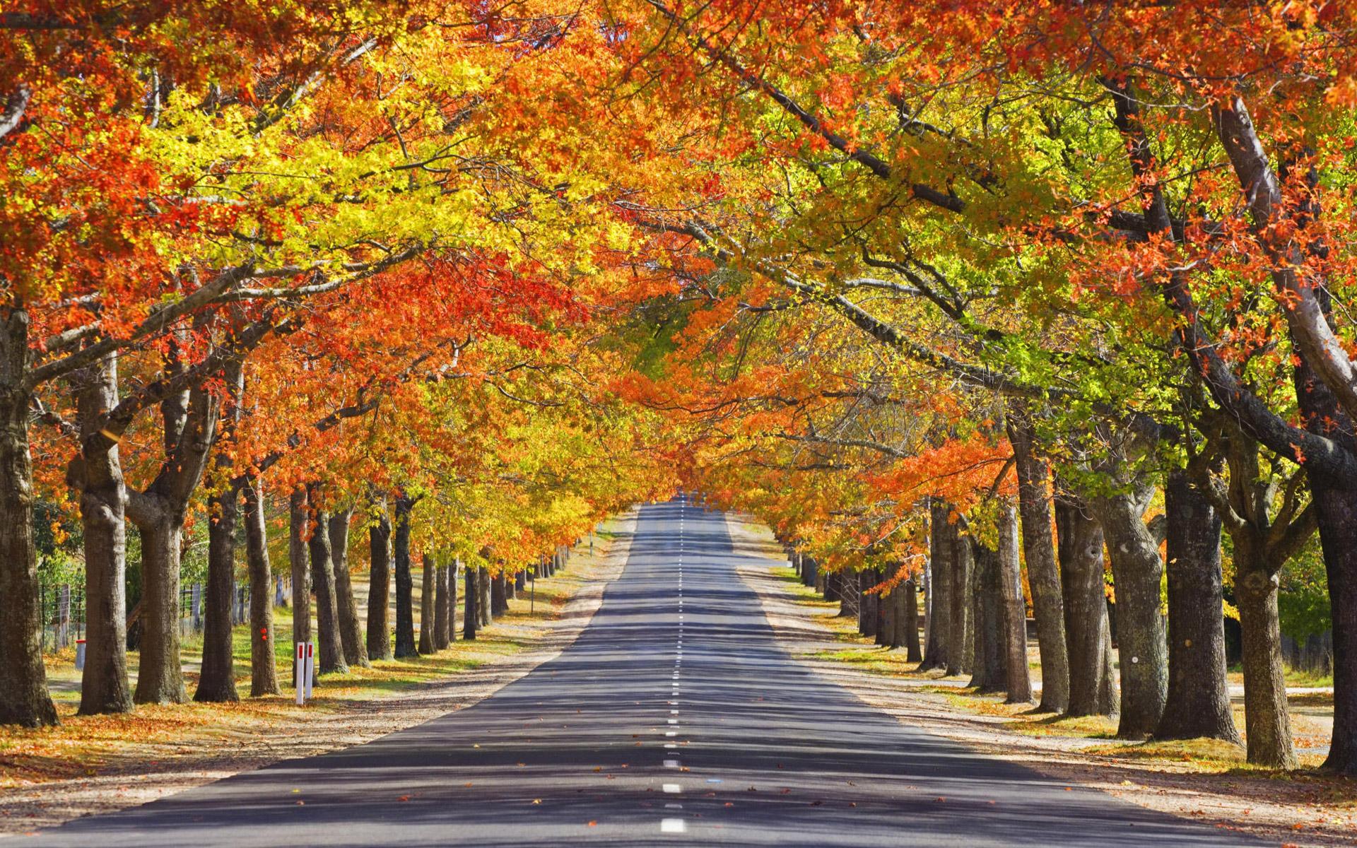 نتیجه تصویری برای پاییز در استرالیا